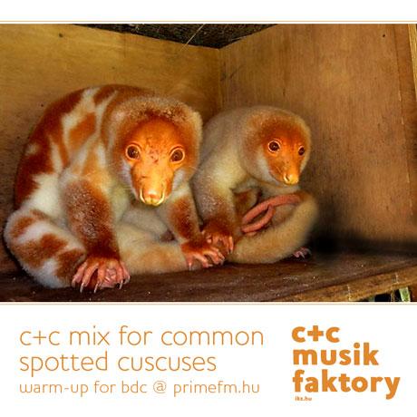 C+C MIx for Cuscuses